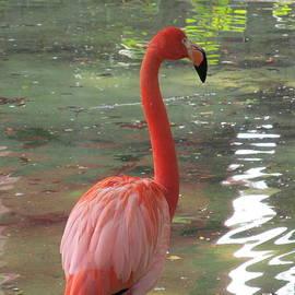 Tina M Wenger - Lone Flamingo
