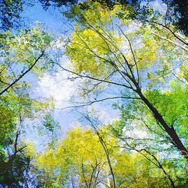 Darren Fisher - Looking Up