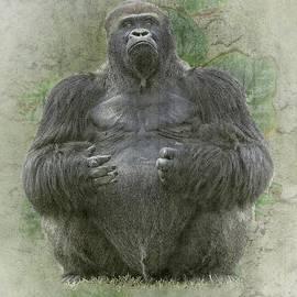 Rudy Umans - Lowland silverback Gorilla
