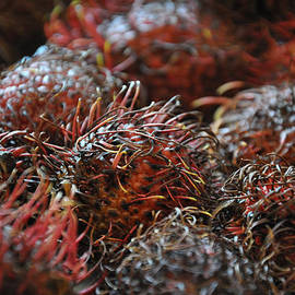 Lychee Fruit 1 by Frank Mari