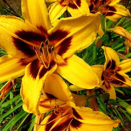 Mackinac Island Lilies by Beth Akerman
