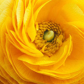 Kathy Yates - Mellow Yellow