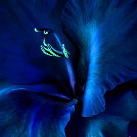 Jennie Marie Schell - Midnight Blue Gladiola Flower