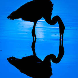 Brian Stevens - Moonlight Heron