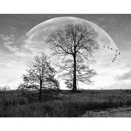 Brian Wallace - Moonlit Silhouette