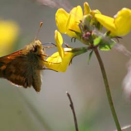 Moth Life by Chriss Pagani