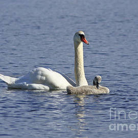 Inspired Nature Photography Fine Art Photography - Mother and Baby on the Lake