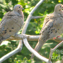 Mourning Doves by Frank Townsley