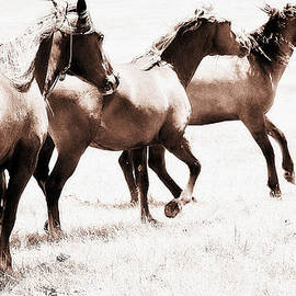 Mustang - The Wild Icon by Elizabeth Hart