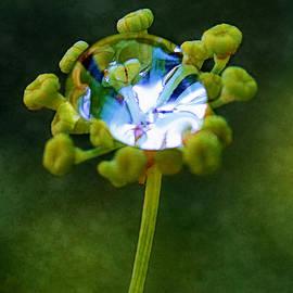 Judi Bagwell - Nature