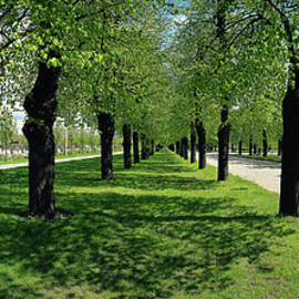 Jan W Faul - Norrkoepping Boulevard