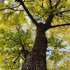 Christine Belt - Ode to the Tree City