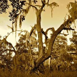 Old Dead Tree by Carol  Bradley