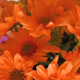 Lynnette Johns - Orange Daisies