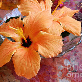 Orange Hibiscus With Purple by Connie Fox