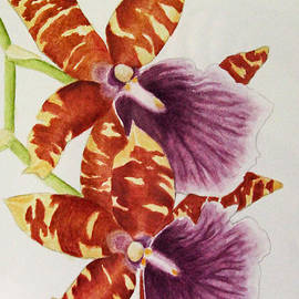 Orchids - Tiger Stripes  by Kerri Ligatich