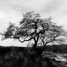 Steven Loyd - Oregon City Tree