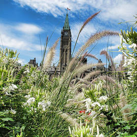 Ornamental Grasses And White Flowers Under Clouds And Blue Sky - Parliament Hill - Canada by Chantal PhotoPix