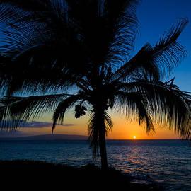 David Buhler - Palm Sunset