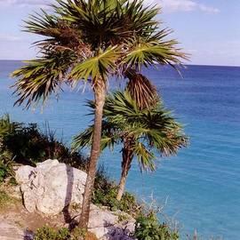 John Malone - Palm Trees at Tulum