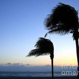 Yali Shi - Palm Trees Swaying in the Wind