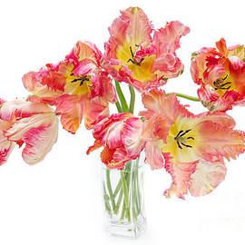 Parrot Tulips in a Glass Vase by Ann Garrett