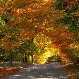 Robert Pearson - Path Way of Color
