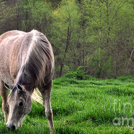 Peaceful Pasture by Lydia Holly