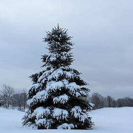 Janet Mcconnell - Pine Tree Covered in Snow