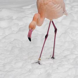 Andrew  Michael - Pink Flamingo