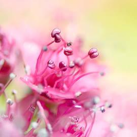 Sharon Johnstone - Pink Magic