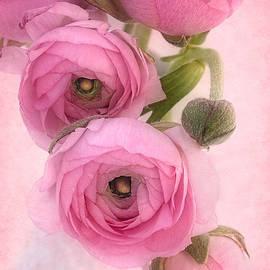Ann Garrett - Pink Ranunculus