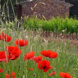 Lainie Wrightson - Poppies on the Vineyard