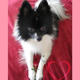 Puppy Love Red Velvet II Motivational by John Shiron