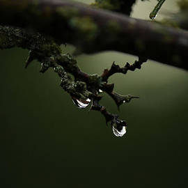 Raindrops On A Bare Twig by Sarah Broadmeadow-Thomas