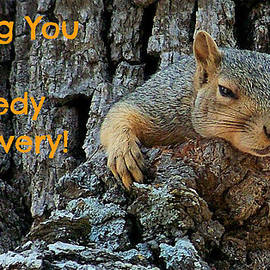 Recovery Squirrel by Sarah Broadmeadow-Thomas