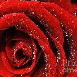 Tracy  Hall - Red Ruby Diamonds