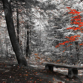 Reds in the Woods by Aimelle