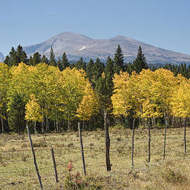 James BO  Insogna - Rocky Mountain High Country Autumn Fall Foliage Scenic View