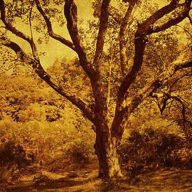 Jenny Rainbow - Roots of Wisdom. Wicklow Hills. Ireland