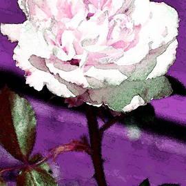 Rose 108 by Pamela Cooper