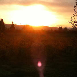 Russian River Sunrise by Kathy Corday