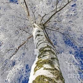 Tanja Riedel - Snowworld Fineart
