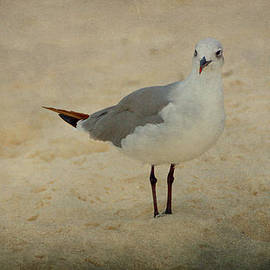 Sandy Keeton - Gull