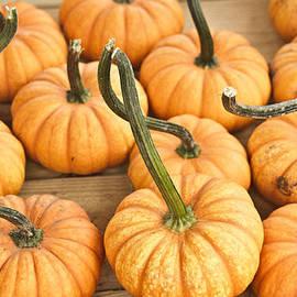 Douglas Barnett - Searching Pumpkins