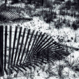 Judi Bagwell - Shadows on the Dune