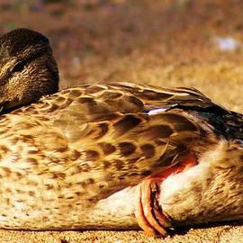 Tina Bryson - Sitting duck