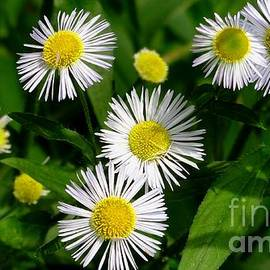 Small white flowers by Meandering Photography