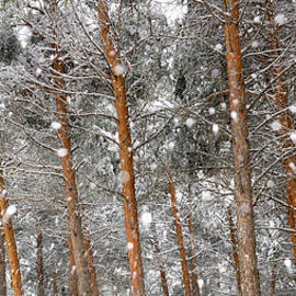Guido Montanes Castillo - Snow In The Woods