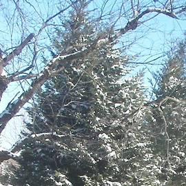 Pamela Hyde Wilson - Snow Sprinkled Pine